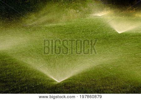 Sprinkler spraying fresh wet water on lush green yard lawn grass