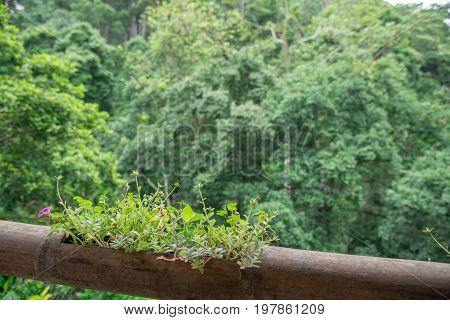 A flower is rose moss or Portulaca in bamboo pot background with green forest