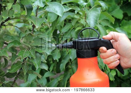Gardener sprinkles young apple tree from pests and diseases with bottle sprayer. He holds sprayer in his hand. Spray fly on leaves.