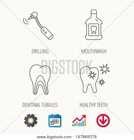Tooth, mouthwash and dentinal tubules icons. Healthy teeth, dentinal tubules linear sign. Calendar, Graph chart and Cogwheel signs. Download colored web icon. Vector