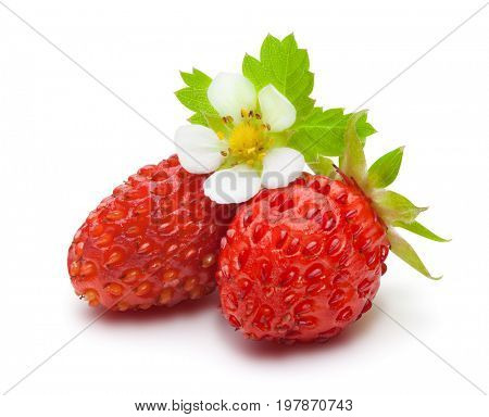 Wild strawberries with green leaves and flower, isolated on the white background, clipping path included.