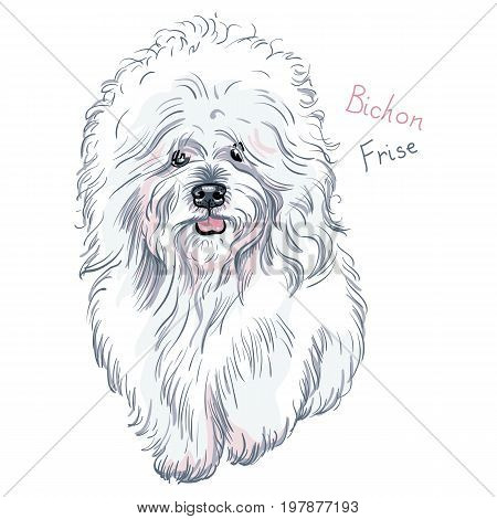 white cute dog Bichon Frise breed on blue background