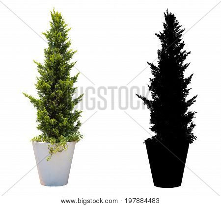a small christmas tree in the pot. isolated on white background with alpha mask