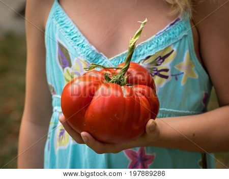 Gigantic tomato held by a child in one hand