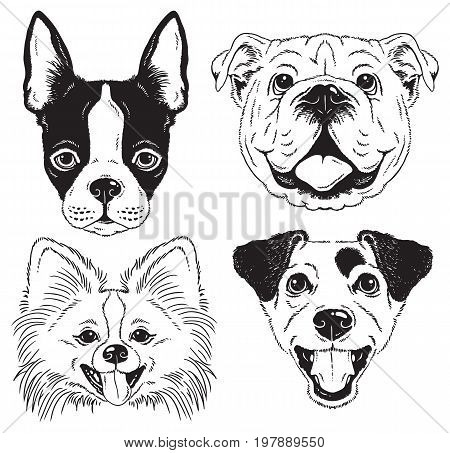 A set of 4 dog's faces - Boston Terrier English Bulldog Toy Pom and Fox Terrier. Black and white vector sketches.