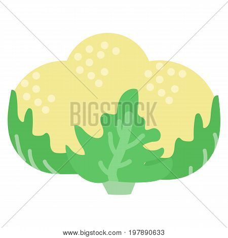 Cauliflower fresh vegetable icon, vector illustration flat style design isolated on white. Colorful graphics