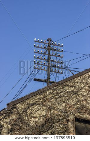 Rural Electric Wire Pole With Porcelain Insulators