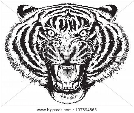 Black and white vector sketch of an angry tiger roaring.