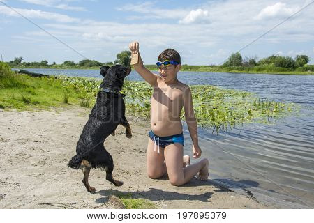 In summer a bright sunny day on the river the boy is trained by a dog. He holds bread in his hand and the dog stands on its hind legs