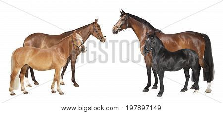 Various Horses Isolated