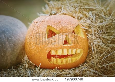 Carved Pumpkin for Celebration of Halloween on a Hay
