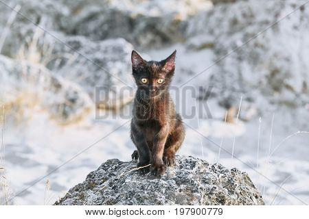 Little Black Kitten on the Stone in Desert