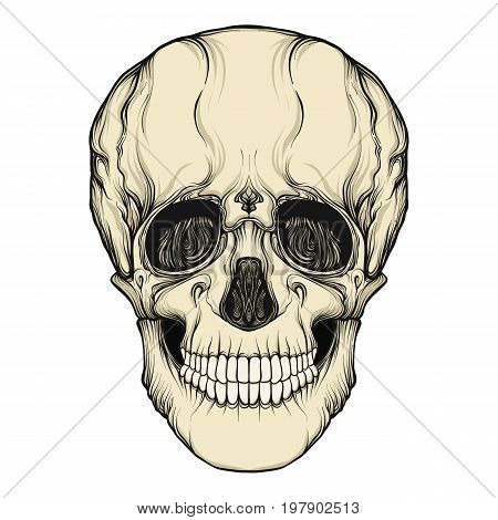 Human skull realistic hand drawing isolated Stock line vector illustration.