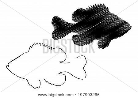 Pumpkinseed Sunfish silhouette vector , (Lepomis gibbosus)