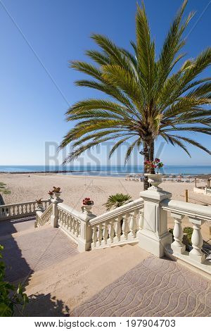 Access To Benicassim Beach With Palm Tree And Stairs Vertical