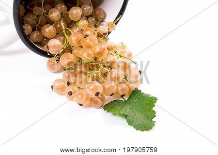 White Cup With White Currant Berry In It And Small Bunch Of White Currant With Green Leaf Isolated O