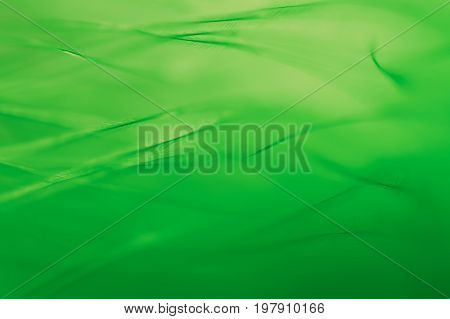 Bird feather. The bird feather green closeup. Beautiful delicate background from feathers
