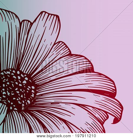 Flower chrysanthemum - beautiful poster, botany. close-up. Color sketch, red gradient. Close-up - seasonal flower - beautiful postcard. Idea for a tattoo. Author gradient