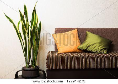 Plant flower pot green white background money