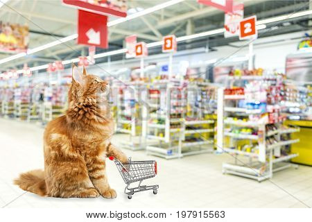 Red shopping cart shop cat background consumerism