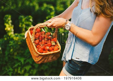 Closeup of woman's hands holding basket with organic garden summer strawberry berries. Healthy lifestyle and healthy eating. Vegetarian snack.Fruit and berries.