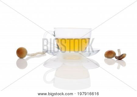 Psychedelic mushroom tea in cup with fresh psilocybin mushrooms isolated on white background. Natural remedy. Alternative medicine.