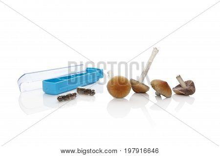 Fresh magic mushrooms dry mushrooms in gel capsules and pill organizer isolated on white background. Psilocybin magic mushorrms. Alternative medicine.