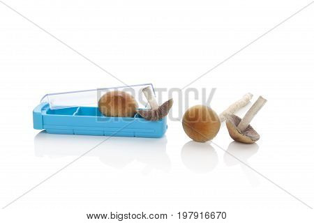 Psychedelic magic mushrooms and pill box isolated on white background. Alternative medicine natural remedy. Microdosing.