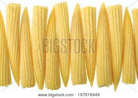 Baby corn in a row isolated on white background