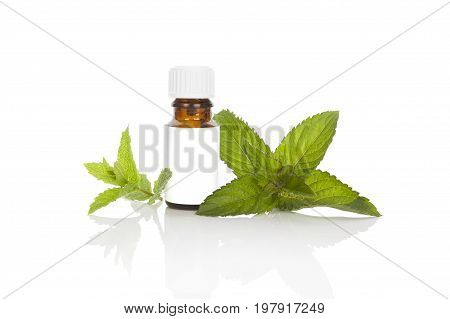 Mint aromatherapy essential oil with mint leaves isolated on white background. Alternative aromatherapy.