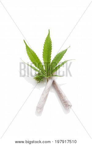 Cannabis cigarettes and leaf isolated on white background. Medical marijuana natural remedy.
