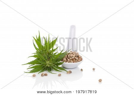 Cannabis seeds on spoon and marijuana bud isolated on white background. Alternative medicine natural remedy medical marijuana.