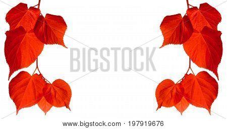 Red Autumn Tilia Leaves