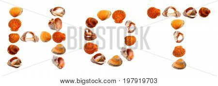HOT text composed of seashells. Isolated on white background.