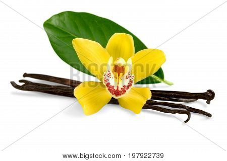 Flower beans vanilla white close-up isolated nature