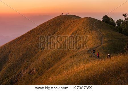 Beautiful Golden Meadow At  Mon-jong Mountain In Sunset ,unseen Of Travel Place In Chiang Mai, Thail