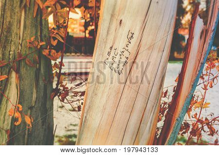 Mass energy equivalence physics formula written on tree wood trunk hand drawn doodle autumn fall season back to school concept education college toned