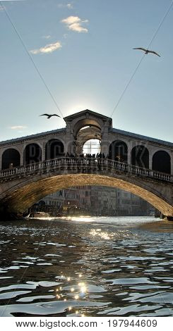 Rialto Bridge em Venice Italy, with seagulls