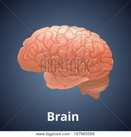 Realistic human organ isolated on dark gray background. Human anatomy part brain. Vector illustration