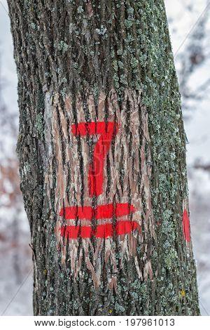 Hiking Trail Marking On The Tree Bark