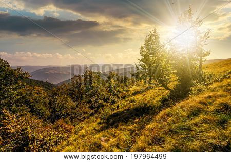 Forest On A Mountain Slope At Sunset