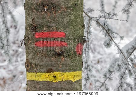 Yellow And Red Stripe Trail On A Tree