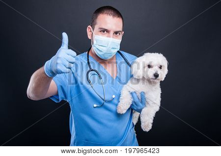 Veterinary Posing With White Bichon Dog Showing Like