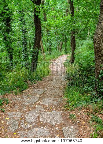 The footpath in the forest in San Marino