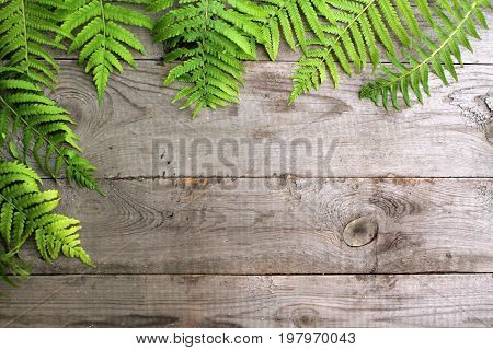 Frame from fern leaves on old unpainted wooden background with copy space. Border is top and left. Place for text. Top view.