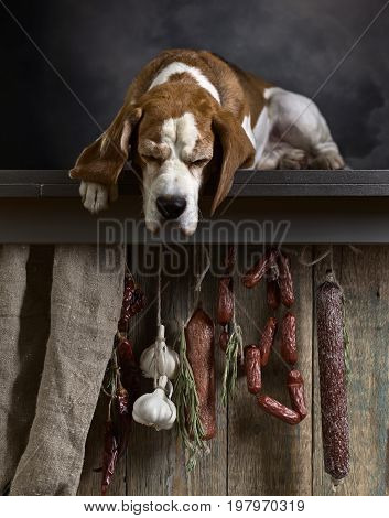 Cute doggie looking at sausages with rosemary and garlic .