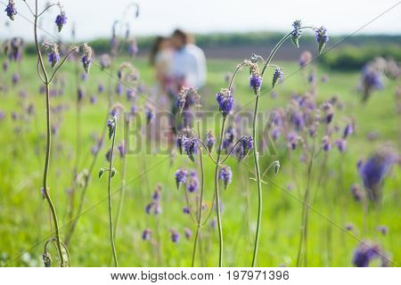 Just married loving couple in wedding dress on green field. Happy bride and groom walking and kissing in the summer meadow. Romantic Married young family