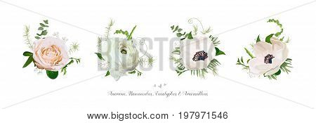 Vector elements bouquets collection of Pink white garden rose anemone ranunculus flowers green eucalyptus and mix of seasonal plants herbs Big vector variation set. Elegant cute design isolated white