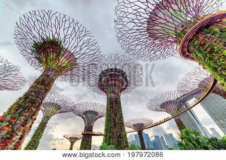 Amazing Evening View Of The Supertree Grove With The Skyway