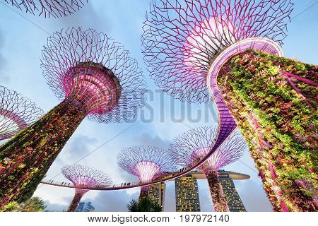 Colorful Evening View Of The Supertree Grove With The Skyway
